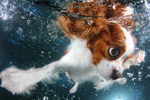 underwater-puppy-photography-seth-casteel-1